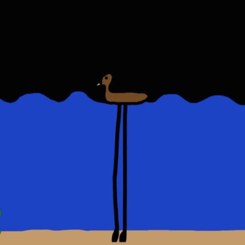 Ducks Have Long Legs
